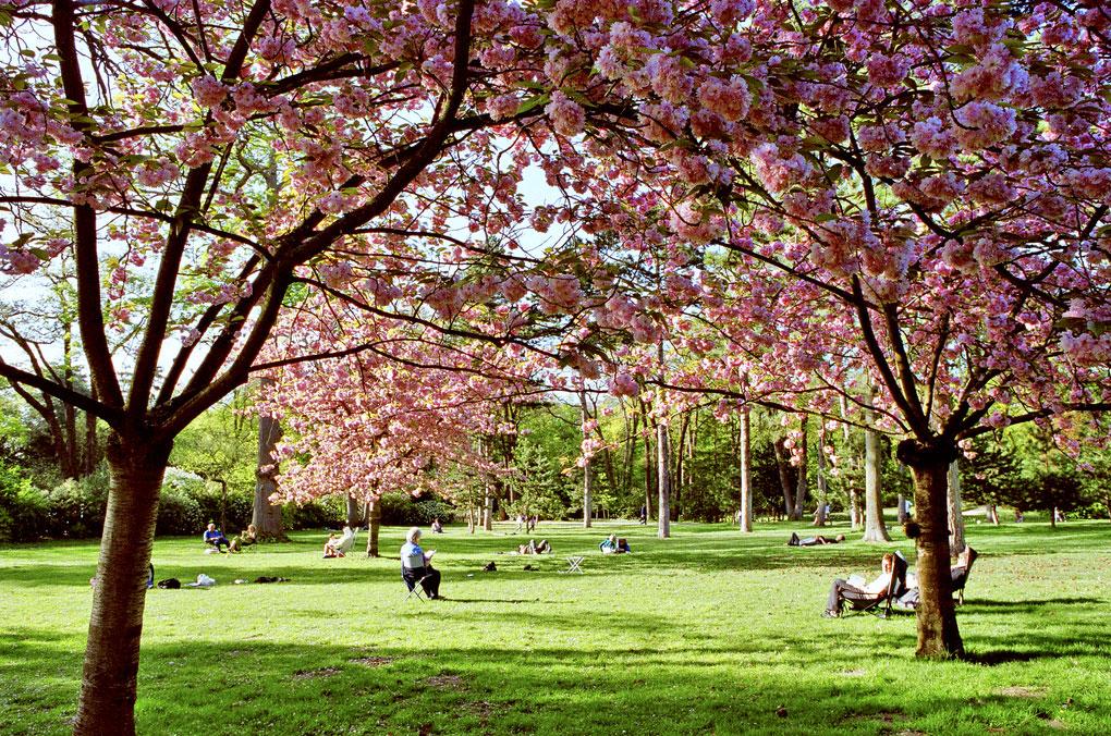 La Clairiere Bois De Boulogne - Visiter le Bois de Boulogne Horaires, tarifs, prix, acc u00e8s